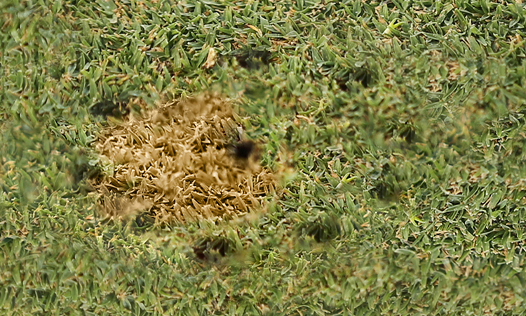 aerated ball-mark/brown spot;
